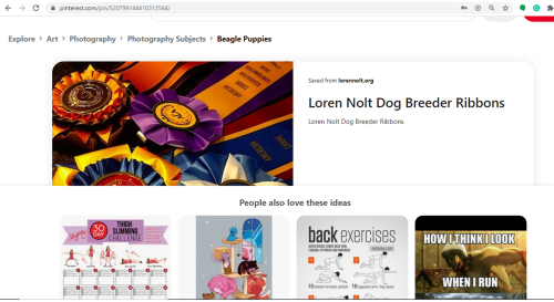 goodbreeder, loren, nolt, dog, breeder, pinterest, images, loren-nolt, dog-breeder, east, earl, pa, pennsylvania, puppy, puppies, kennels, mill, puppymill, 5-star, aca, ica, registered, show handler, pug, daschund, usda, 23-a-0523, 23a0523, licensed, inspected
