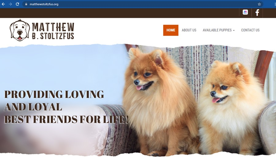 matthew, stoltzfus, dog, breeder, home, homepage, matthrew-stoltzfus, dog-breeder, gap, pa, pennsylvania, goodle, doodles, pugs, frensh, bulldogs, puppy, mill, puppymill, ofa, records, kennel, reviews