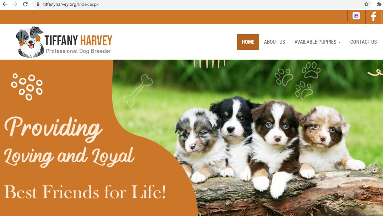 tiffany, harvey, dog, breeder, home, homepage, tiffany-harvey, dog-breeder, avery, tx, texas, aussie, australian, shepherd, mix, mini, miniature, aussiedoodles, puppy, mill, puppymill, usda, inspection, records, kennel